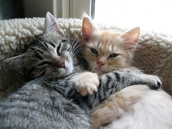 cute_cats_kittens_hugging_10.jpg